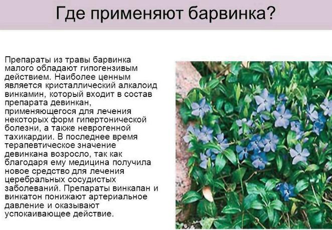 Пасты для лечения галитоза в Выползово,Павловске,Чистополе