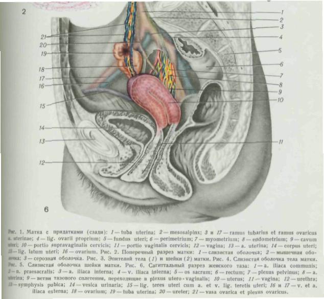 polovie-organi-opisanie-foto