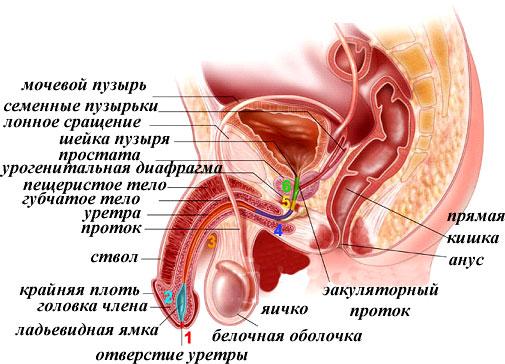 лечение простатита сумамедом