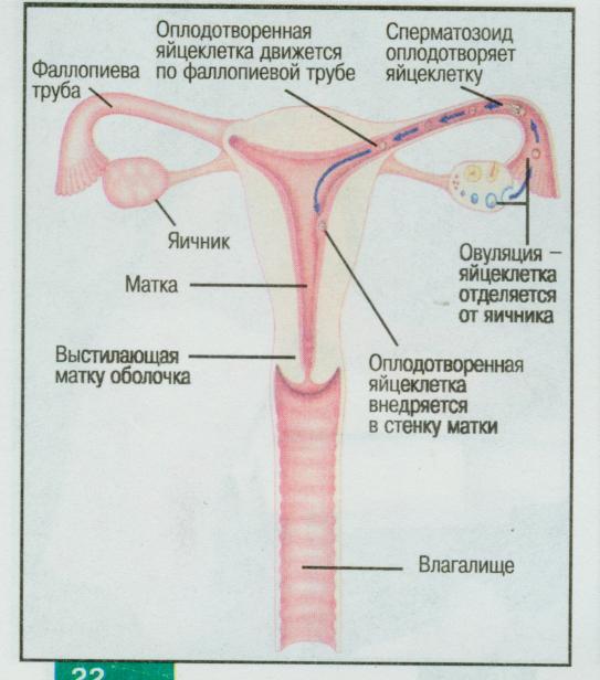 naskolko-zhivucha-sperma