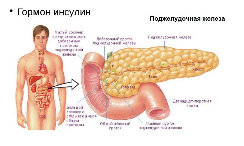 Как называется гормон который вырабатывается у женщин от секса
