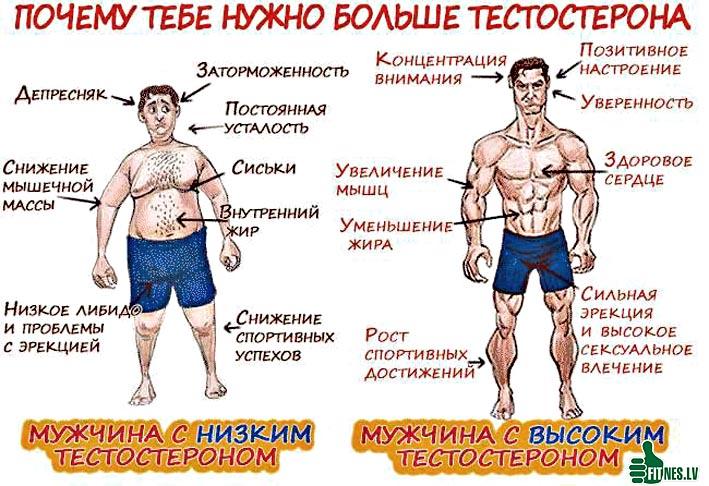 Повысить тестостерон у мужчин в домашних условиях 153